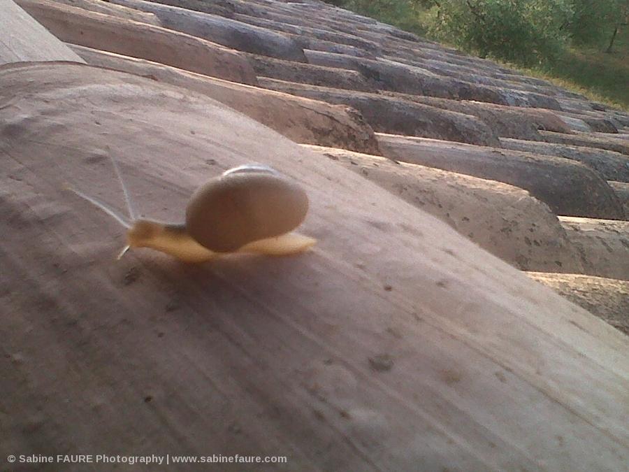Escargot sur le Toit, à l'Aurore,en Provence Photo:Sabine FAURE